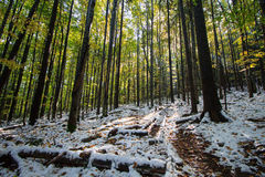 Fallen trees on trail in a snowy forest. Nature Stock Photography