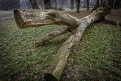 fallen treestam Fotografering för Bildbyråer