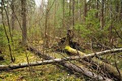 fallen treeswind Arkivfoto