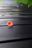Zen nature. Fallen tropical red flower on wood path royalty free stock images