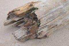 Fallen trunk. Royalty Free Stock Photos