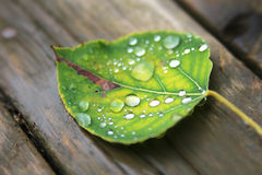 Fallen wet leaf with drops. Fallen wet leaf on wooden background with focus on rain drop Stock Image