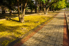 Fallen yellow flower in the walk way. Make a walk way color to yellow Royalty Free Stock Images