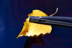 Fallen yellow leaf on a car window as a symbol of autumn, the concept of changing seasons. Fallen yellow leaf on a car window as a symbol of autumn stock image