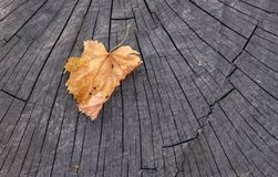 The fallen yellow leaf. Lies on the stump Royalty Free Stock Image