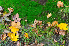 Fallen yellow leaves on the ground Royalty Free Stock Photo