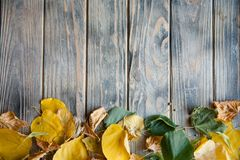 Fallen yellow leaves wooden background autumn royalty free stock photo