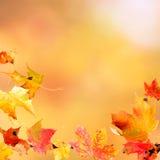 Fallende Ahornblätter Stockfoto