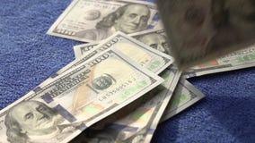 Fallende Banknoten stock video