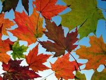 Fallende Blätter Stockfoto