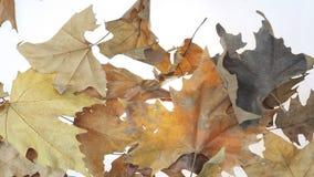 Fallende Blätter stock footage