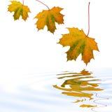 Fallende Blätter Lizenzfreies Stockfoto