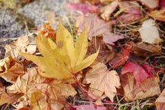 Fallende Blätter Stockfotos