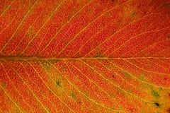 Fallende Blätter Lizenzfreie Stockfotos