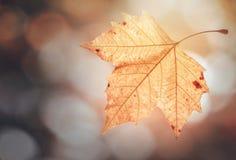 Fallende Blätter auf bokeh Hintergrund stockbild