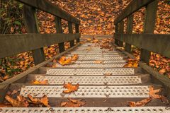 Fallende Blätter auf Treppe Stockfotos