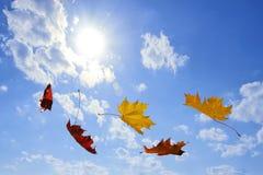 Fallende Blätter des Herbstes Lizenzfreies Stockfoto