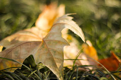 Fallende Blätter im Winter Lizenzfreie Stockfotos