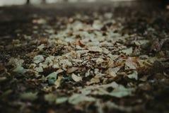 Fallende Blätter von einer düsteren Naturlandschaft lizenzfreies stockfoto