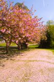 Fallende Blüte Lizenzfreie Stockbilder