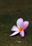 Fallende Blüten Stockbild