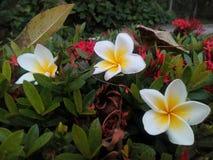 Fallende Blüten Lizenzfreies Stockbild
