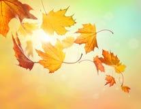 Fallende Blätter des Herbstes Stockfotos