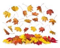 Fallende Blätter des Herbstes Stockfotografie
