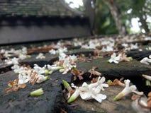 Fallende Blume Lizenzfreies Stockfoto