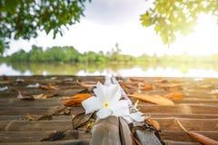 Fallende Blumen aus den Grund nahe dem Fluss lizenzfreie stockfotografie
