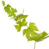 Fallende Grünblätter Stockfoto