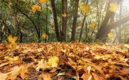 Fallende Herbst-Blätter Stockfotos