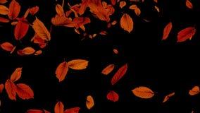 Fallende Herbst-Blätter lizenzfreie abbildung