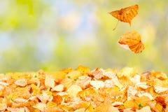 Fallende Herbst-Blätter Stockfoto