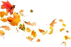 Fallende Herbst-Blätter Lizenzfreie Stockbilder