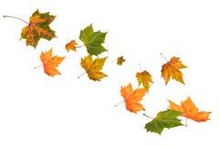 Fallende Herbst-Blätter Lizenzfreie Stockfotografie