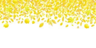 Fallende Herbstblätter lizenzfreies stockbild