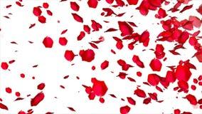 Fallende rosafarbene Blumenblätter auf weißem Hintergrund stock abbildung