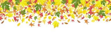 Fallender Herbstblattrand stockfotos