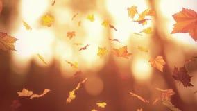 Fallender Herbstlaub stock footage