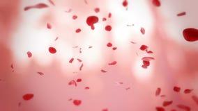 Fallender Hintergrund der rosafarbenen Blumenblätter Lizenzfreies Stockbild