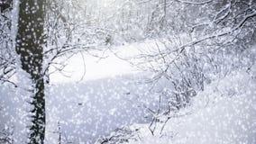 Fallender Schnee stock video footage