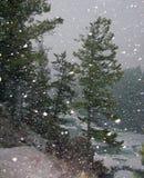 Fallender Schnee Stockfotos