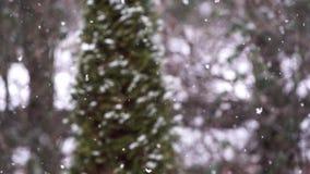 Fallender Schnee in der Zeitlupe mit unscharfer Kiefer stock video