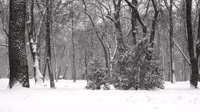 Fallender Schnee in einem Winter parkt in der Zeitlupe stock video