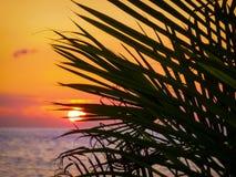 Fallender Sun stockfotos