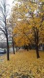 Fallendes Gelb Lizenzfreies Stockfoto