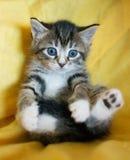 Fallendes gestreiftes Kätzchen mit blauen Augen Stockfotos