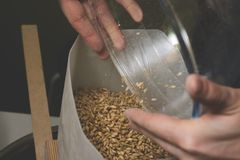Fallendes Malz in eine selbst gemachte Mühle für das weitere Reiben Handwerk ist Lizenzfreies Stockbild