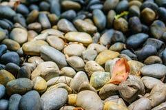 Fallendes rotes Blatt auf dem Felsen Stockfoto